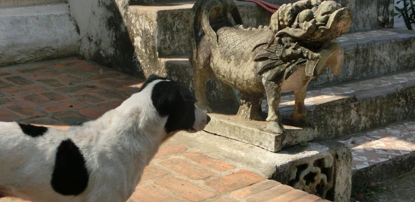 Hunde von Bukarest